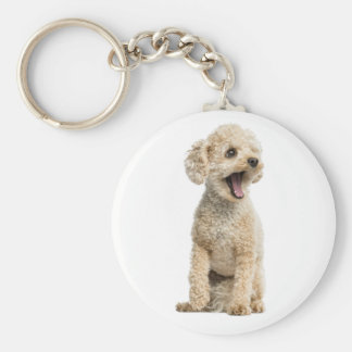 Apricot Poodle Puppy Dog Key Ring