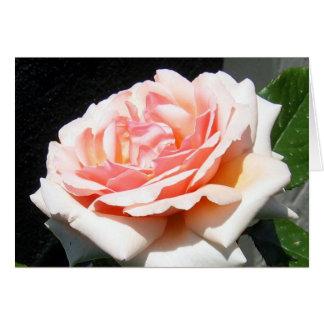 Apricot Rose Card