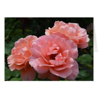 Apricot Rose I Photo Card