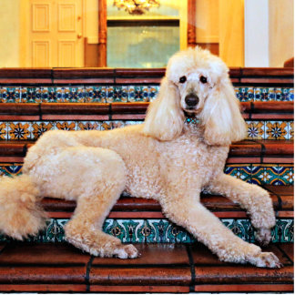 Apricot Standard Poodle - Bocelli Standing Photo Sculpture