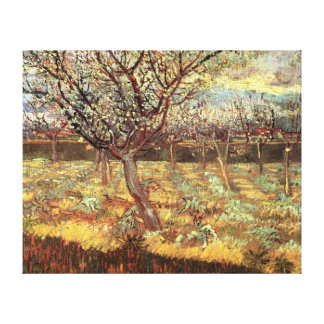 Apricot Trees In Blossom Stretched Canvas Prints