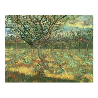 Apricot Trees in Blossom, Vincent van Gogh Postcard