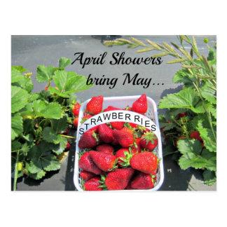 April Showers bring May...STRAWBERRIES! Postcard