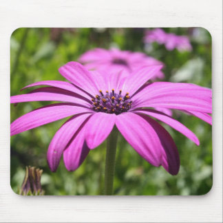 April's Daisy Mouse Pad