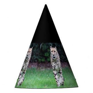 Aqua_Cheetah_20180103 Party Hat