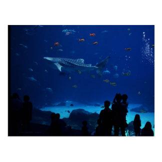 Aquarium, Atlanta Georgia Postcard