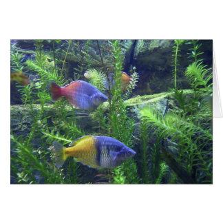 Aquarium Fish Card