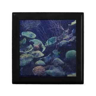 Aquarium Gift Box