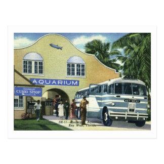 Aquarium, Key West, Florida Vintage Postcard