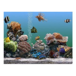 aquarium rsvp postcard