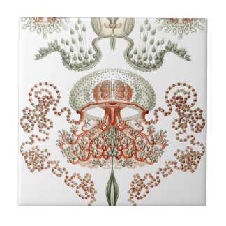 Aquatic Life ~ Haeckel ~ Jellyfish Ceramics Ceramic Tile