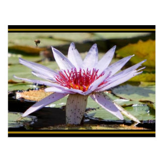 Aquatic Plant Life Postcard