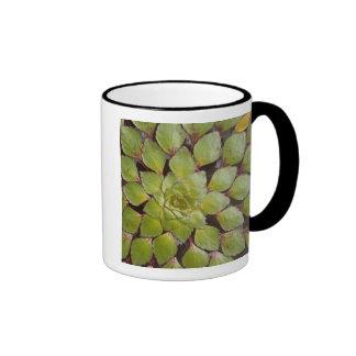 Aquatic Plants Rupununi, Guyana. Mug