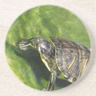 Aquatic turtle getting out of water beverage coaster