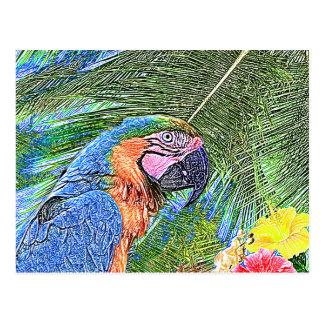 Ara parrot postcard