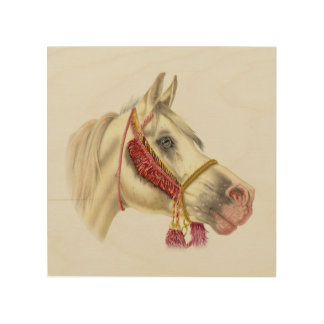Arab Horse Portrait Wood Print