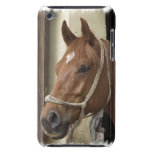 Arab Horses iTouch Case iPod Case-Mate Case