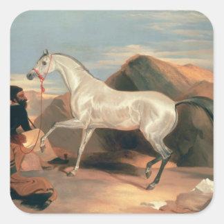 Arab Stallion Square Sticker