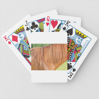 Arabian brown horse in pasture close view of mane bicycle playing cards