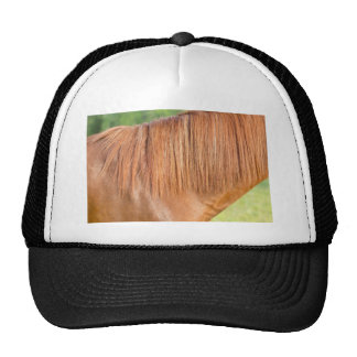 Arabian brown horse in pasture close view of mane cap