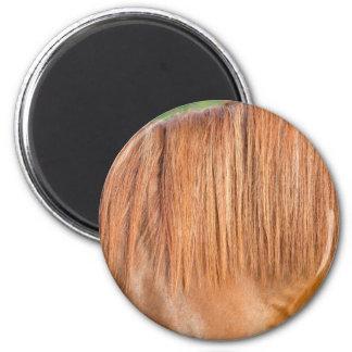 Arabian brown horse in pasture close view of mane magnet