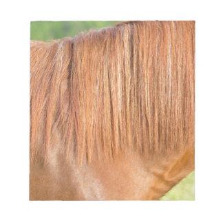 Arabian brown horse in pasture close view of mane notepad