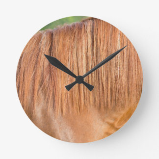 Arabian brown horse in pasture close view of mane round clock