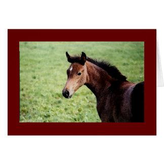 Arabian foal note card
