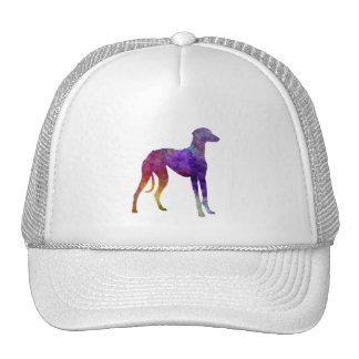 Arabian Greyhound in watercolor Cap
