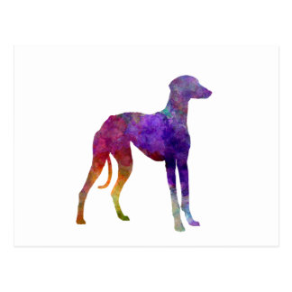 Arabian Greyhound in watercolor Postcard