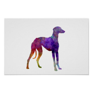 Arabian Greyhound in watercolor Poster