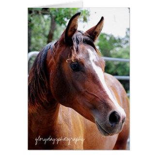 arabian horse head shot, glorydaysphotography card