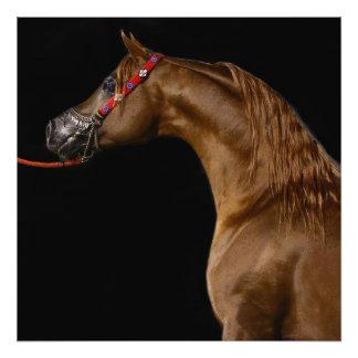Arabian horse photo print