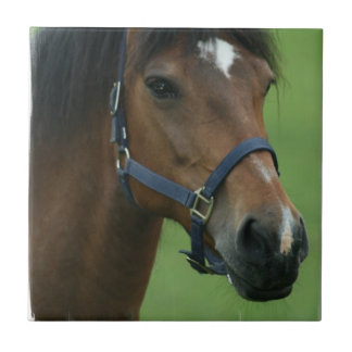 Arabian Horse Pictures Tile