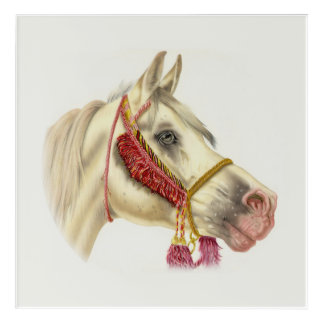 Arabian Horse Portrait Acrylic Wall Art