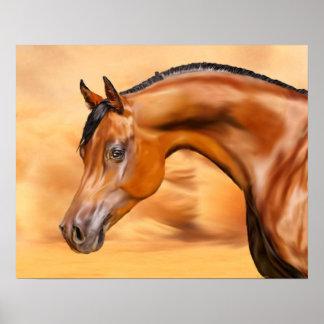 Arabian Horse Poster