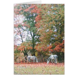 Arabian Horses Chas & Chiaro Card