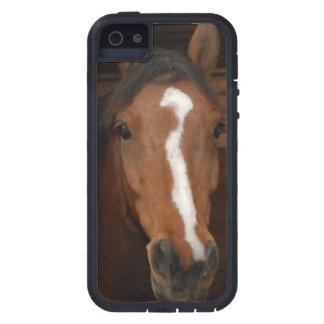 Arabian Horses iPhone 5 Cover