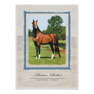 Arabian Stallion Poster