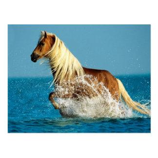 Arabian thoroughbred horse postcard