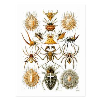 Arachnida (Spiders) Ernst Haeckel Fine Art Postcard