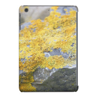 Aran Lichen Stone iPad Mini Retina Covers