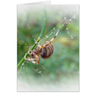 Araneus - Orb Weaver Spider Card