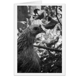 Araucana Chicken Blank Card