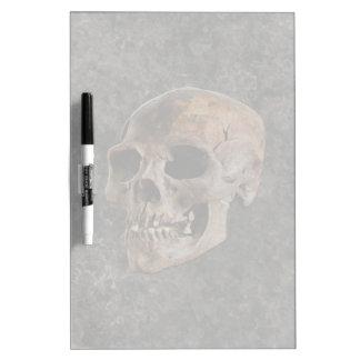 Archaeology II - Skull on Stone-effect Background Dry Erase Board
