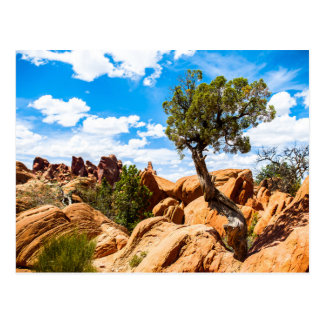 Arches National Park - Geological Formations Postcard