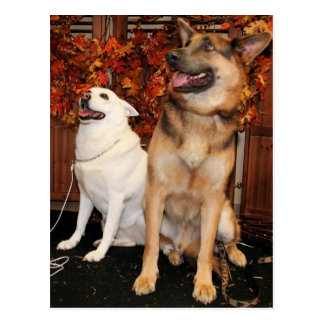 Archie and Nellie - German Shepherds Postcard