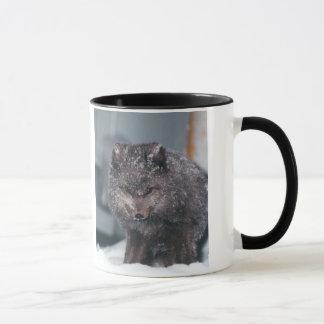 Arctic Alaska Blue Phase Winter Fox Photo Designed Mug