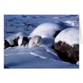Arctic Fox Greetings Card