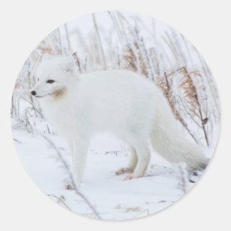 Arctic Fox Round Sticker